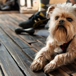 3 ways a pet-friendly office can help your business
